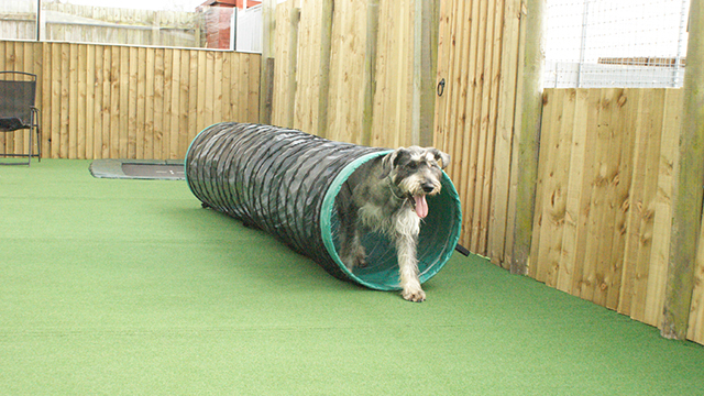 Dog Kennels and Doggy Day Care